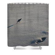 Beachcombing Plover Shower Curtain