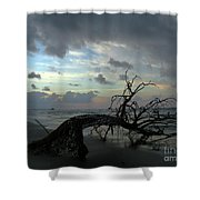 Beached Tree Shower Curtain