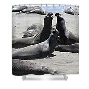 Beachmasters - Elephant Seals Shower Curtain