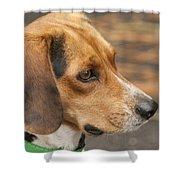 Beagle Loyalty Shower Curtain