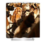 Beagles At Stowe Shower Curtain