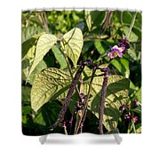 Bean And Beauty Shower Curtain
