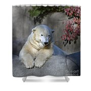 Bear 3789 Shower Curtain