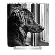 Bear At Window Shower Curtain