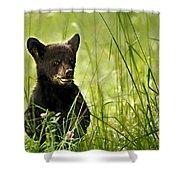Bear Cub In Clover Shower Curtain