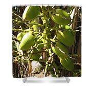Bear Fruit Shower Curtain