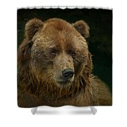 Bear In The Pool Shower Curtain