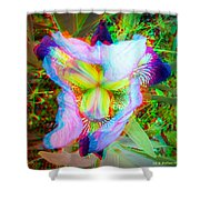 Bearded Iris Cultivar - Use Red-cyan 3d Glasses Shower Curtain