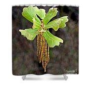 Bearded Oak Shower Curtain