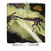 Bearded Robber Flies Shower Curtain