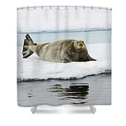 Bearded Seal On Ice Floe Norway Shower Curtain