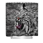 Bearizona Bobcat Shower Curtain by Priscilla Burgers