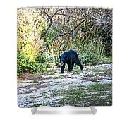 Bearly Stroll Shower Curtain
