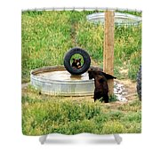 Bears At Play Shower Curtain
