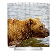 Bear's Eye View Of Swimming Grizzly In Moraine River In Katmai Shower Curtain