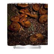 Beartooth Mountain Mushrooms   #3661 Shower Curtain