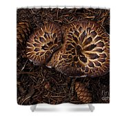Beartooth Mountain Mushrooms   #9142 Shower Curtain