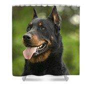 Beauceron Dog Shower Curtain
