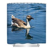 Beautiful African Brown Goose Shower Curtain
