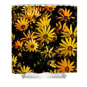 Beautiful African Daisies Shower Curtain