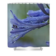 Beautiful  Agapanthus Shower Curtain