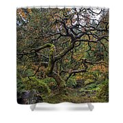 Beautiful And Bare Japanese Lace-leaf Maple Tree Shower Curtain