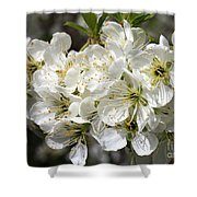 Beautiful Apple Blossoms Shower Curtain