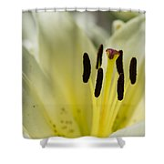 Beautiful Beauty - Featured 3 Shower Curtain
