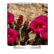 Beautiful Beavertail Cactus Shower Curtain