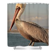 American White Pelican Shower Curtain