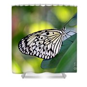 Beautiful Black N White Rice Paper Butterfly Shower Curtain