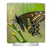Beautiful Black Swallowtail Shower Curtain
