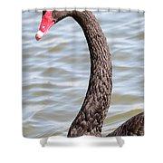 Beautiful Black Swan Shower Curtain
