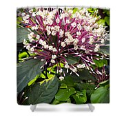 Beautiful Bloom Shower Curtain
