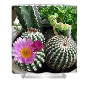 Beautiful Blooming Cactuses Shower Curtain