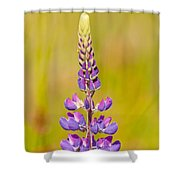 Beautiful Blooming Lupine Flower In Warm Sunlight Shower Curtain