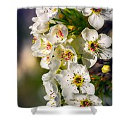 Beautiful Blossoms Shower Curtain