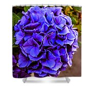 Beautiful Blue Hydrangea Shower Curtain