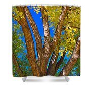 Beautiful Blue Sky Autumn Day Shower Curtain