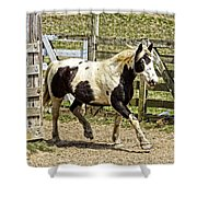 Beautiful Boy Shower Curtain