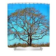 Beautiful Branching Shower Curtain