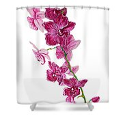 Beautiful Burgundy Orchid Flower Original Floral Painting Pink Orchid I By Megan Duncanson Madart Shower Curtain