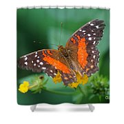 Red Anartia Butterfly 1 Shower Curtain