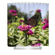 Beautiful Butterfly Shower Curtain