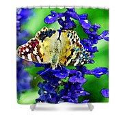 Beautiful Butterfly On A Flower Shower Curtain