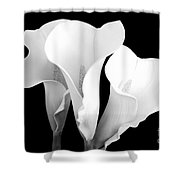Beautiful Calla Lilies In Black And White Shower Curtain
