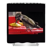 Beautiful Colored Hummingbird Shower Curtain