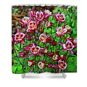 Beautiful Columbine   Shower Curtain