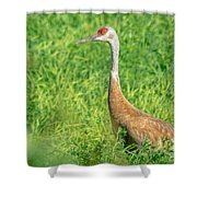 Beautiful Crane Shower Curtain