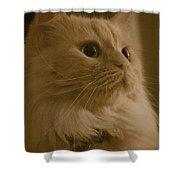 Beautiful Creamy Persian Cat Mix Portrait Shower Curtain